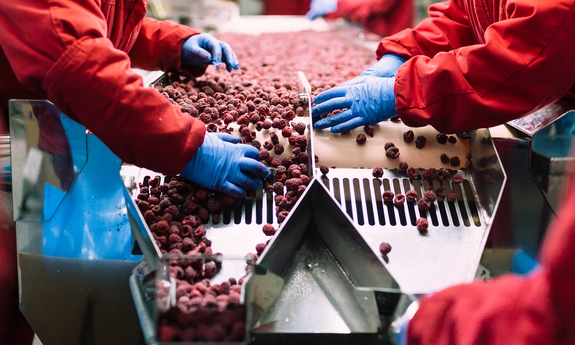 Facing the Challenges of the Food and Beverage Industry